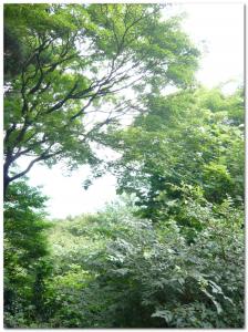 筑波山緑の中