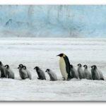 イモト南極大陸最高峰【ヴィンソン・マシフ】登山に挑戦!結果は?